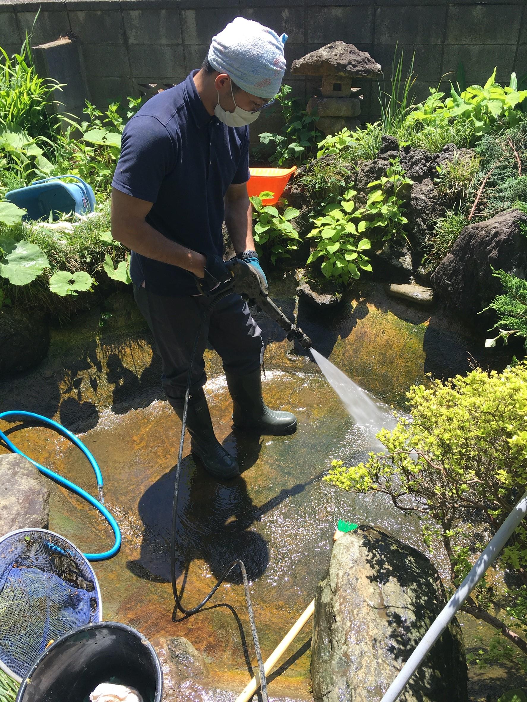 庭池 清掃 鯉 ダイスケ・ハナコ_7602