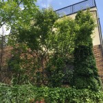 千葉市若葉区|一軒家の庭木の剪定を行いました。