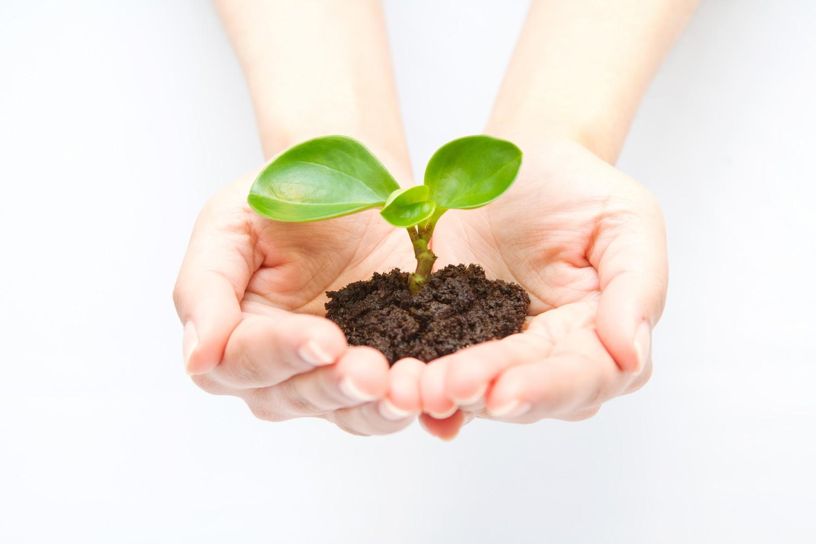 リサイクル苗木