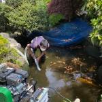 横浜市戸塚区|庭池清掃作業、庭池清掃方法